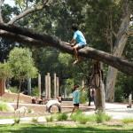 kid in tree adventure playground